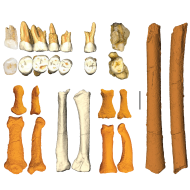 h_luzonensis_callao_cave_archaeology_project.png